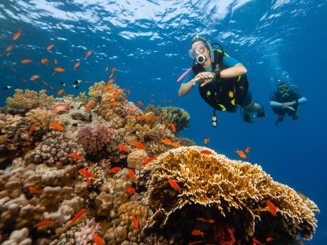 Contribuez à la préservation de l'environnement marin !