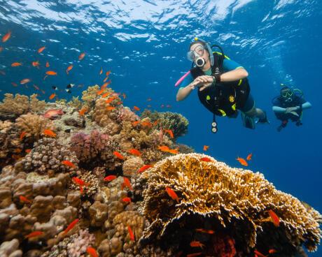 Tornar-se mergulhador autónomo para ter mais liberdade!