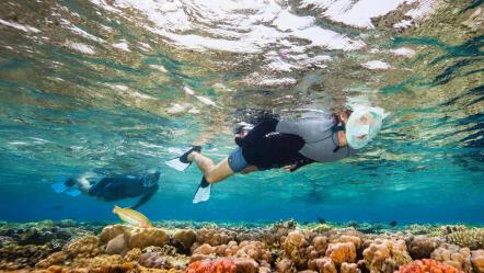 subea_snorkeling_palmes.jpg