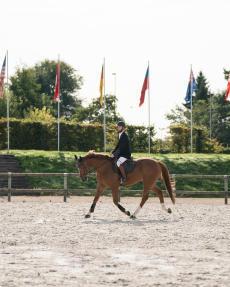 cheval en concours
