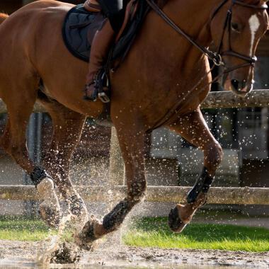 beenbescherming voor je paard