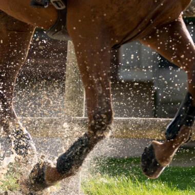 protections des membres pour cheval