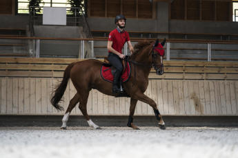 Bahnen in der Reithalle ziehen muss nicht langweilig sein. Fordere dein Pferd heraus.