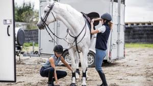 Faire monter son cheval dans un van