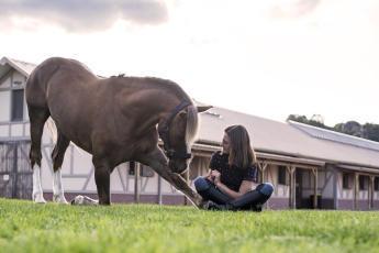 Bodenarbeit mit dem Pferd kann so schön sein und stärkt die Beziehung