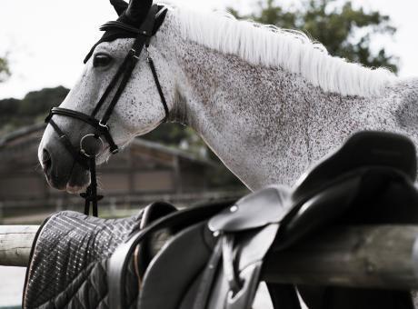 préparation concours équitation