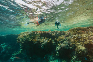 Como escolher o seu conjunto de snorkeling (passeio aquático) ?