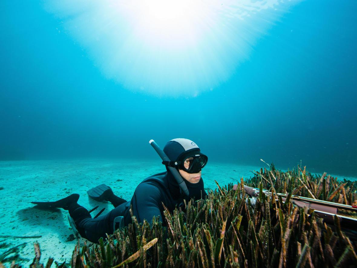 Quelles sont les tailles réglementaires en chasse sous-marine ?