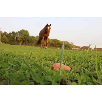 Friandises équitation cheval et poney HAPPY TREATS fruits rouges - 200 gr - 1289014