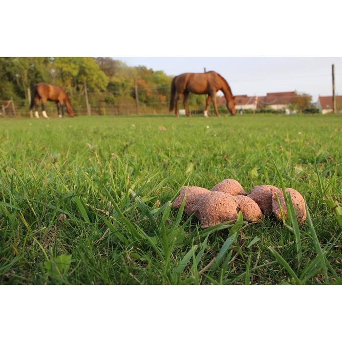 Friandises équitation cheval et poney HAPPY TREATS fruits rouges - 200 gr - 1289016