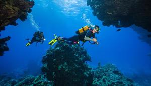 Comment préparer son voyage de plongée ?