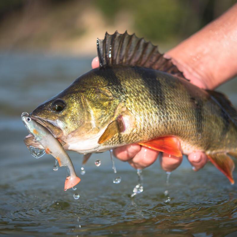 PERCHE: Pêchez là en Street Fishing !