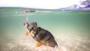 teaser-vissen-kunstaas