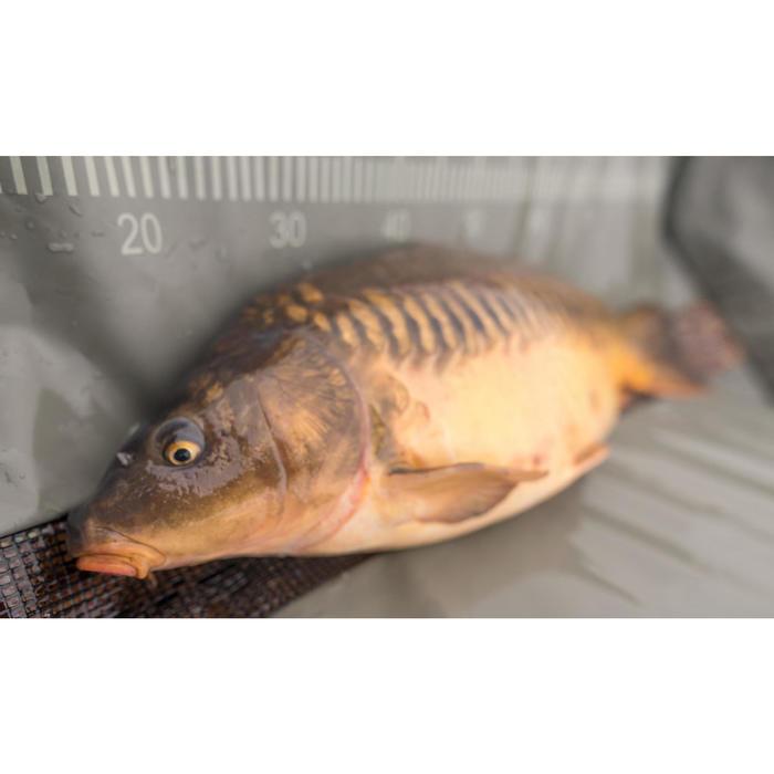 Onthaakmat karpervissen Landing Carp Mat-9