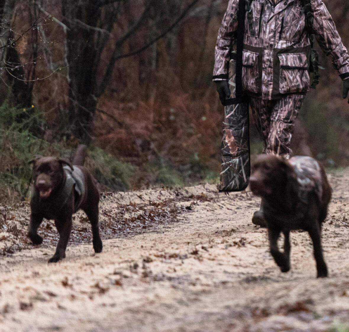 Interview Jérome Bonnevaux : éduquer son chien au rapport à l'eau
