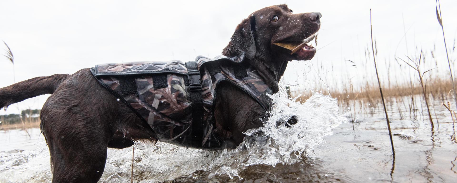 Maitriser le poids chez le chien de chasse
