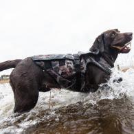 Maîtriser le poids de forme de votre chien de chasse