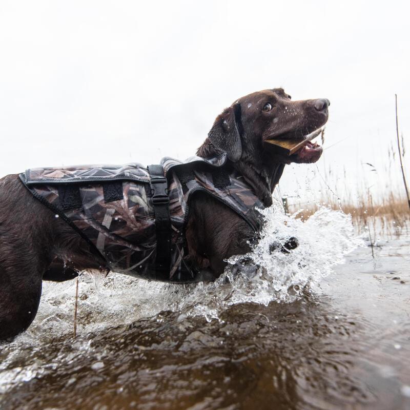 La prise de poids chez le chien : comment revenir