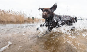 和狗一起跑步