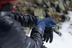 Onderhandschoenen voor trekking Forclaz 50 volwassenen zijde touch - 141923