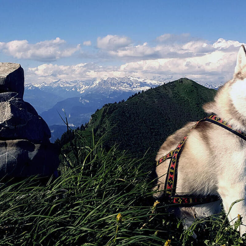 Say goodbye to dog-walking and say hello to dog-led hiking - title