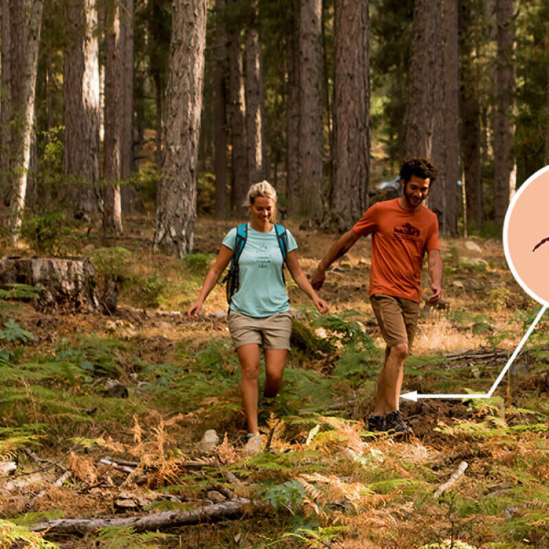 How to protect yourself from ticks when out hiking - title