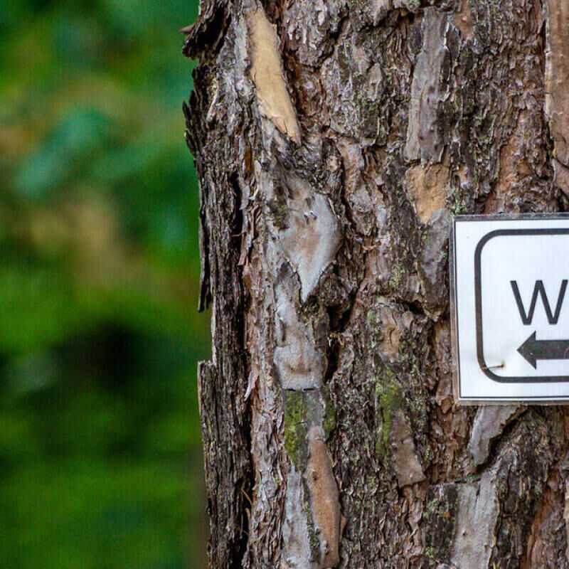How to go to the toilet in the woods - title