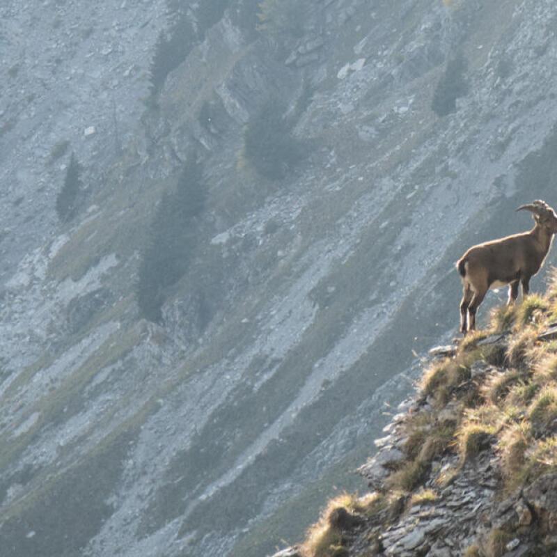 Comment observer la faune en montagne - titre