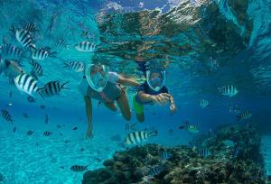 éco gestes snorkeling subea decathlon
