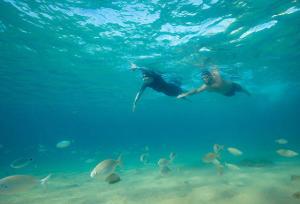 Pour les amateurs de bassins intérieurs ou de piscines chauffées qui ont à coeur de découvrir de nouvelles sensations aquatiques, l'eau libre pourrait être LA solution !
