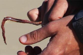 Comment présenter facilement ses appâts pour la pêche en mer ?