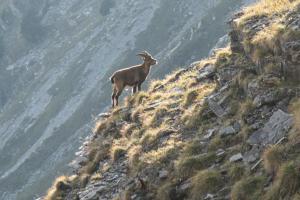 Comment bien observer la faune en montagne - teaser