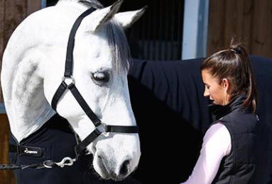 Quelle taille de licol choisir pour mon cheval ?