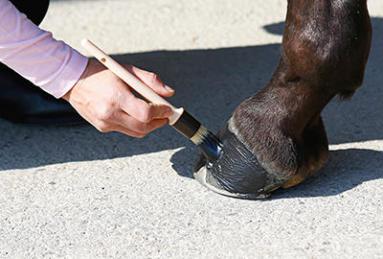 Quelle graisse pour les sabots de mon cheval ?