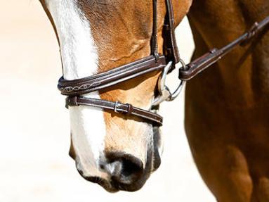 comment choisir un bridon pour cheval ?