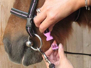comment choisir un filet pour cheval ?