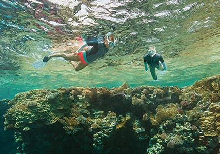 潛水與浮潛的安全建議