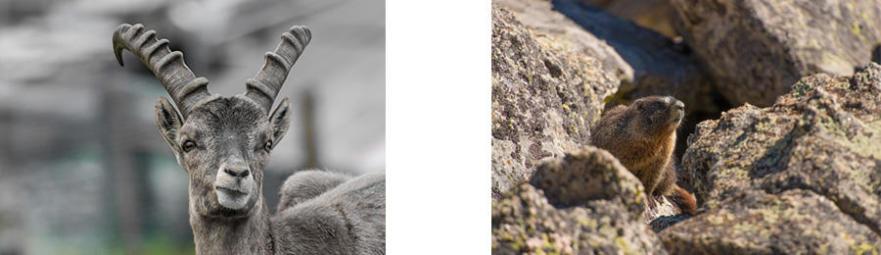 Comment faire de belles photos en montagne - animaux