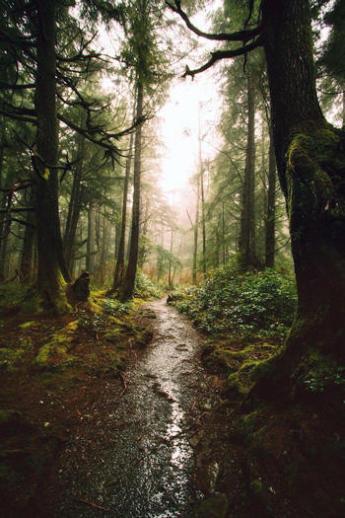 Comment bien se protéger des tiques en randonnée ?