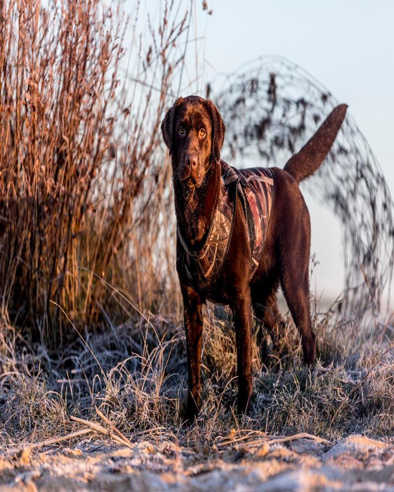 hondenbrokken-hond-jacht