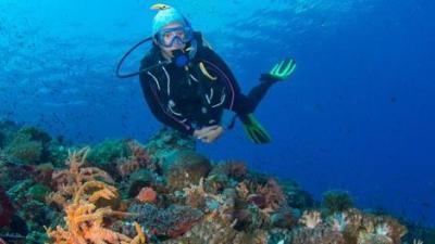 tb-mobile-conseil-bien-reussir-voyage-plongee-sous-marine-subea-indonesie-alor-red-sand.jpg