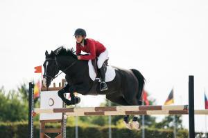 concour équitation