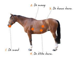 vertering van het paard