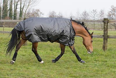 comment_choisir_couverture_cheval_illus1.jpg