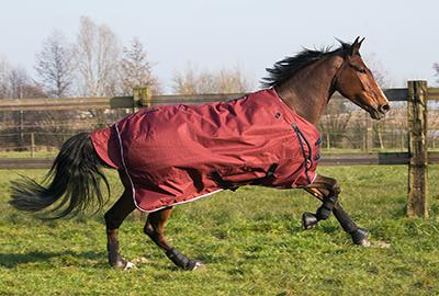 nl_afbeelding_ruitersport_desk_paardenkens_rode_fouganza.png
