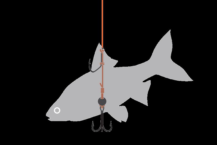 conseil pour la pêche à la sillure