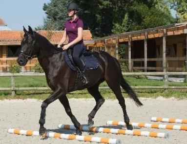 oefening paard