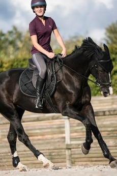 zwart paard