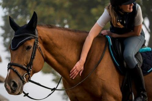 belonen paard