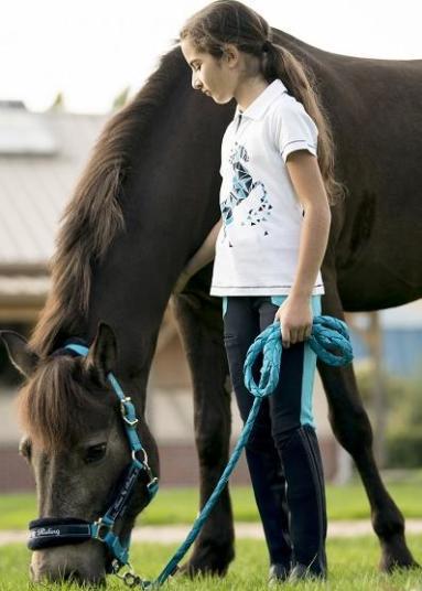 manege equitation